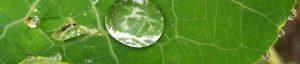 contact-leaf